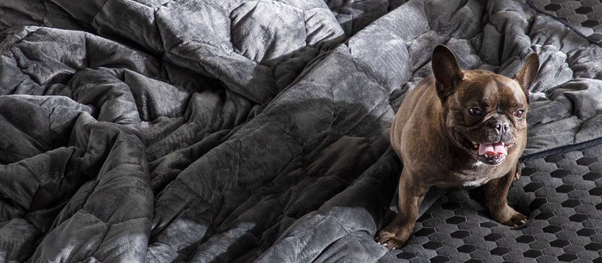 blanket-with-puppy