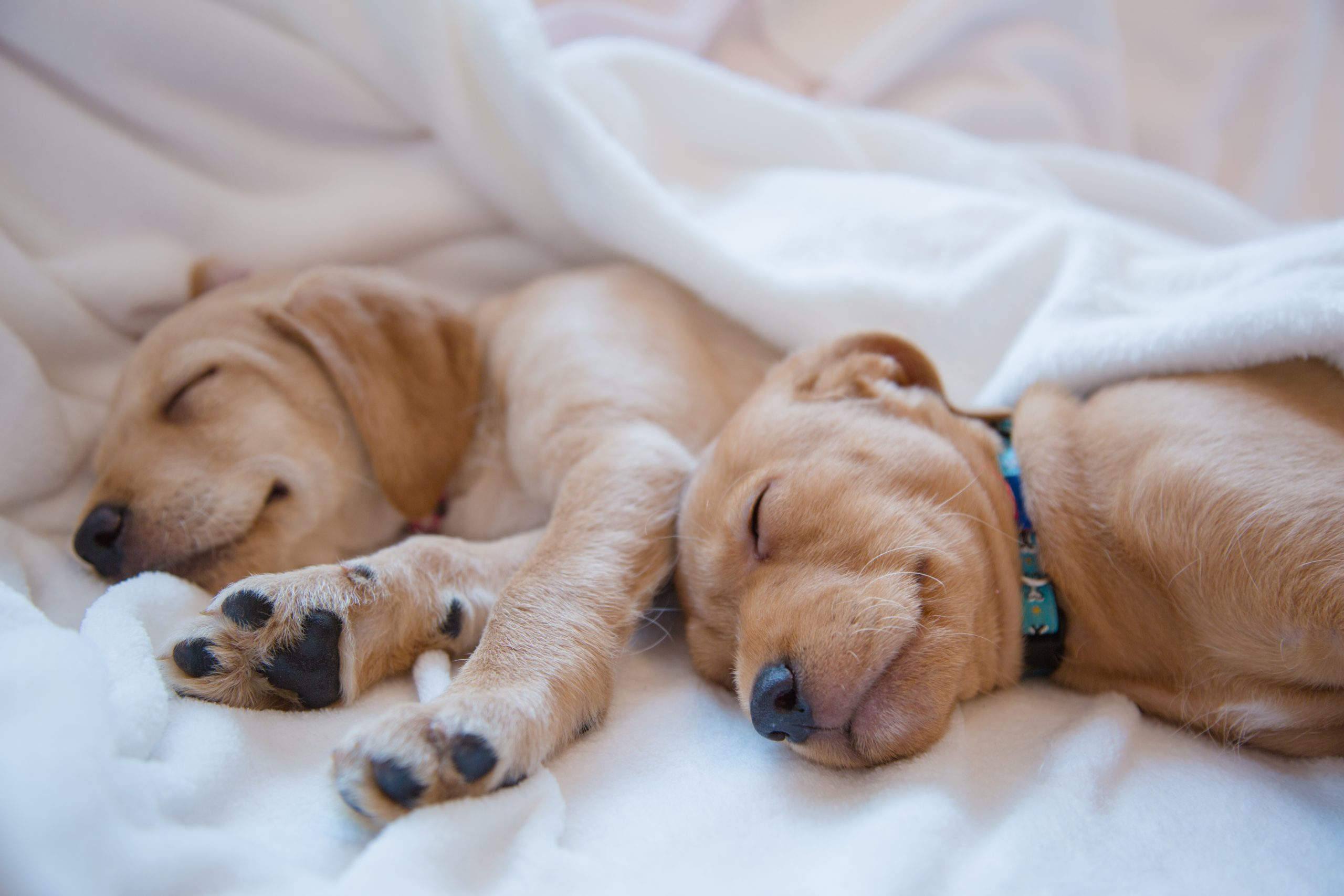 Benefits of Letting Your Pet Sleep in Your Bed