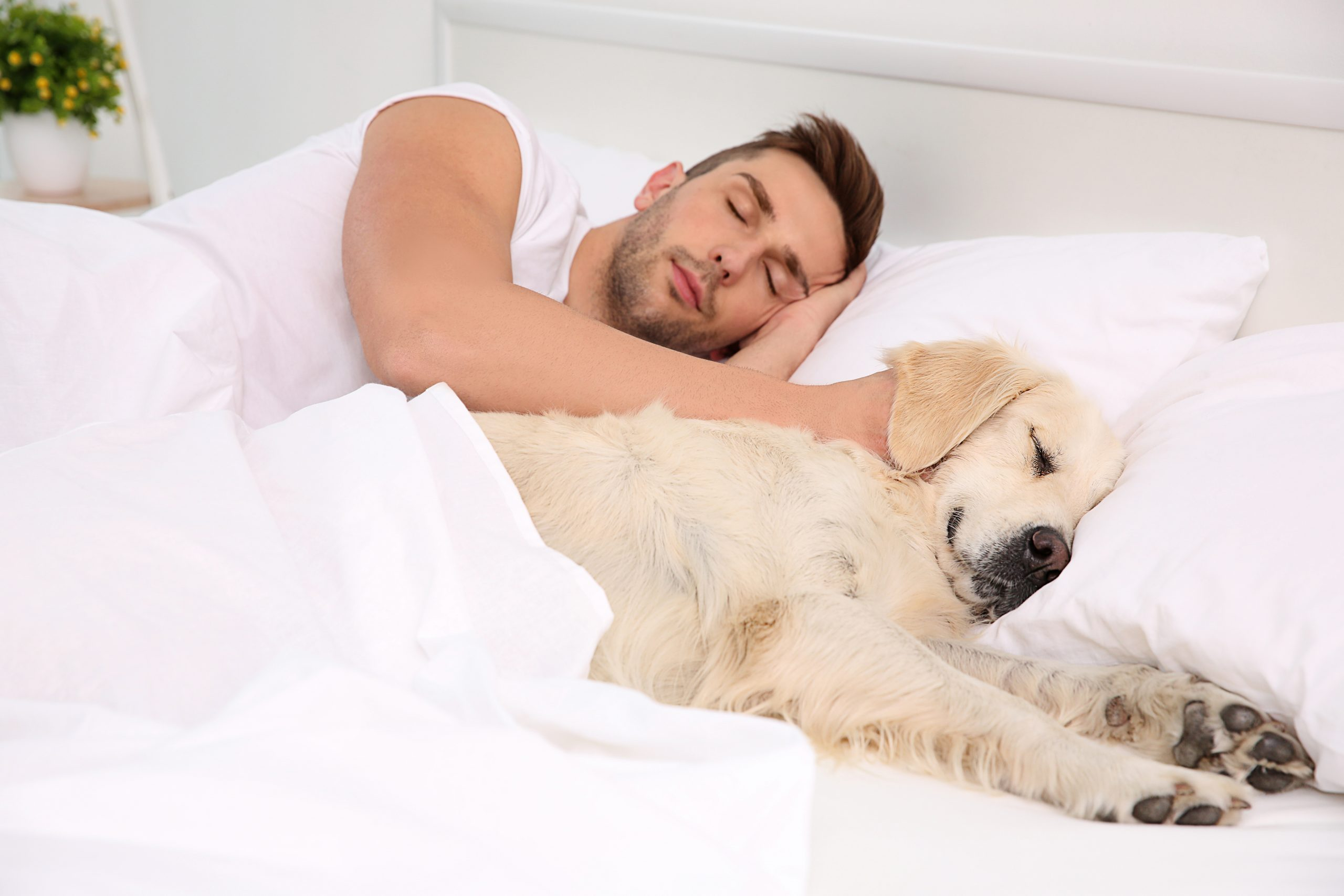 The Pros and Cons of Your Dog Sleeping in Your Bed